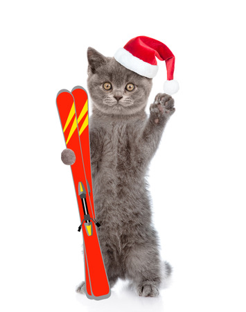 cat isolated: Cat in christmas hat holding skiing. isolated on white background.