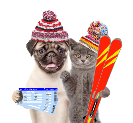 Puppy and kitten in winter hats with tickets and skiing. isolated on white background.