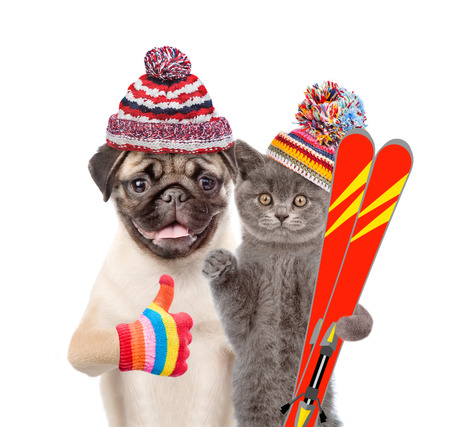 Kitten and Puppy in warm hat holding skiing and showing thumbs up. isolated on white background.