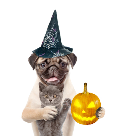 perros vestidos: Cat and dog in hats for halloween with pumpkin. isolated on white background.