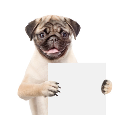 carlin: Dog holding empty board. isolated on white background.