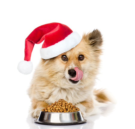 holiday food: Puppy in red christmas hat lying with a bowl of dry dog food and licked. isolated on white background.