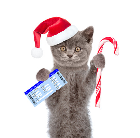 first plane: Cat in red christmas hat holding airline ticket and candy cane. isolated on white background. Stock Photo