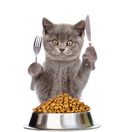 Cat with bowl of dry dog food holds a knife and fork. isolated on white background. Stockfoto