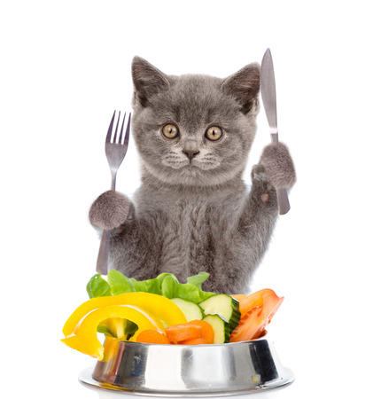 Cat with a bowl of vegetables holds a knife and fork. isolated on white background.