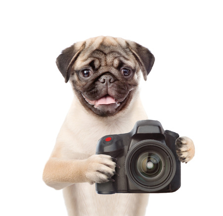 carlin: Dog photographer taking pictures. isolated on white background.