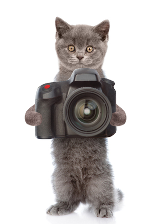 carlin: Cat photographer taking pictures. isolated on white background.