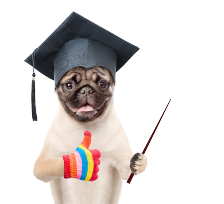 egresado: Graduated dog holding a pointing stick and showing thumbs up. isolated on white background.