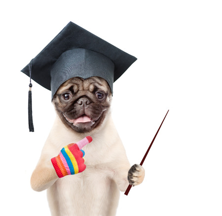 Graduated dog holding a pointing stick and points away. isolated on white background.