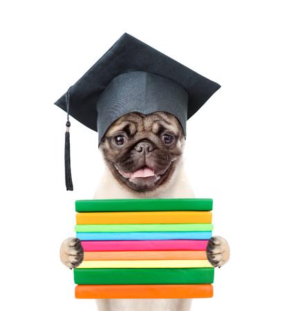 graduated: Graduated dog with books. isolated on white background.