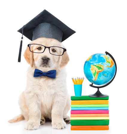graduated: Graduated puppy sitting near books and globe. isolated on white background.