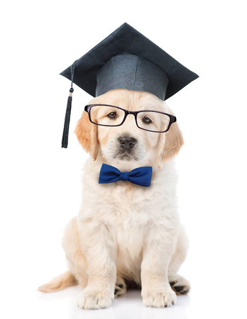 Golden retriever puppy with black graduation hat and eyeglasses. isolated on white background.