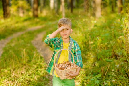 Boy with mushrooms searches for the road in the forest.