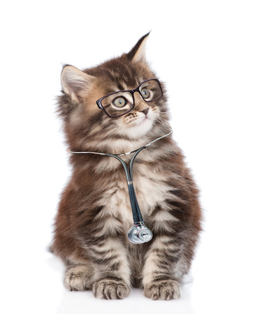 Cat with a glasses and stethoscope on his neck looking away. isolated on white background.