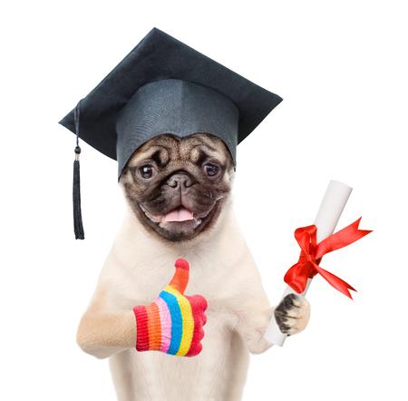 educator: Graduated dog with diploma. isolated on white background.