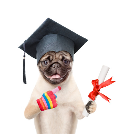 paw smart: Graduated dog with diploma. isolated on white background.