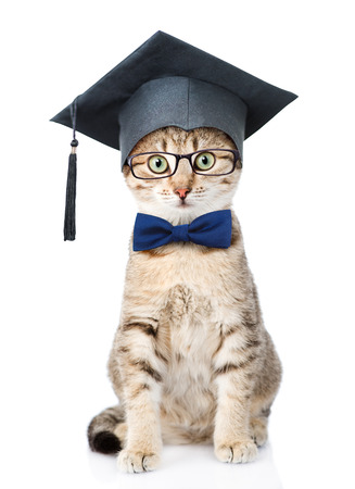 Cat with black graduation hat and eyeglasses. isolated on white background.