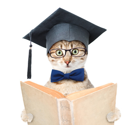 Cat with black graduation hat reading a book. isolated on white background.