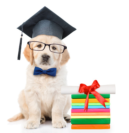 Graduated puppy with books and diploma. isolated on white background. Stock Photo