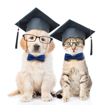 Cat and Golden retriever puppy with black graduation hats and eyeglasses sitting together. isolated on white background.