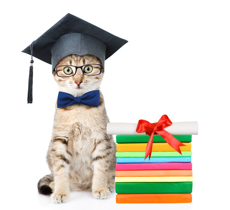 Cat with black graduation hat sitting near books with diploma. isolated on white background.