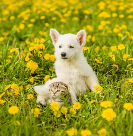 Welpe und Kätzchen, die zusammen auf dem Rasen des Löwenzahns liegen.