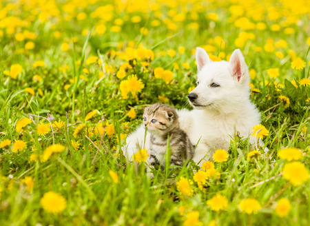 Puppy and kitten lying together on a green grass. Stock Photo