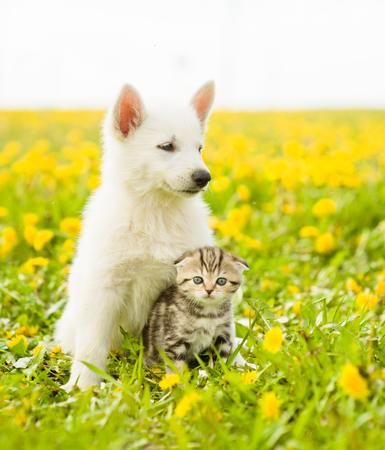 Puppy hugging a tabby kitten on a field of dandelions. Stock Photo