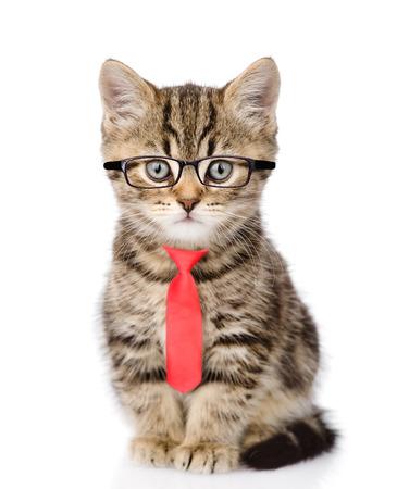 Gato de Tabby que llevaba gafas y una corbata roja. aislado sobre fondo blanco. Foto de archivo