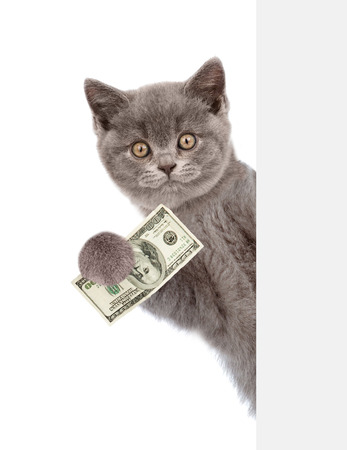 Cat peeking from behind empty board and holding money. isolated on white background.