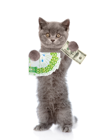 Cat holding dollar and euro in their paws. isolated on white background. Stock Photo