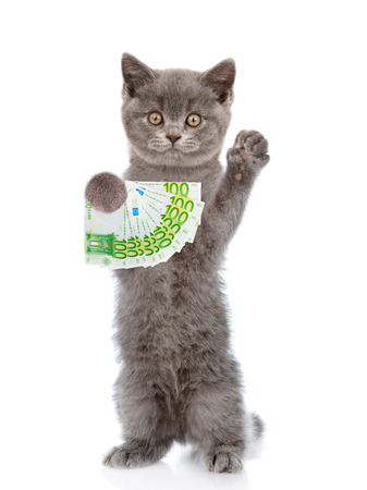 Cat holding euro in his paws. isolated on white background.