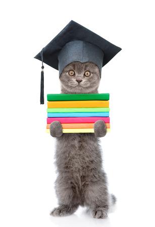 graduacion: Graduado gato con libros de pie sobre las patas traseras. aislado sobre fondo blanco.