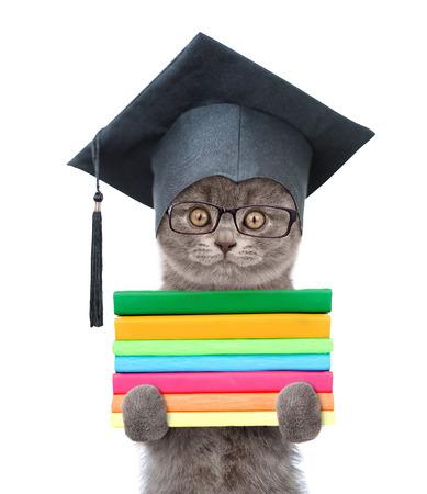 graduated: Graduated cat with books. isolated on white background.