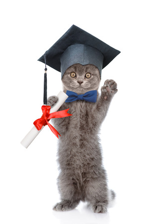 hind: Graduated cat with diploma standing on hind legs. isolated on white background.