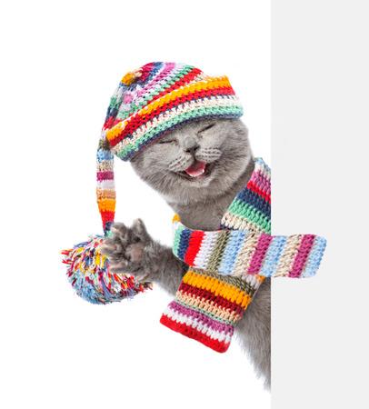 Katze trägt einen Schal und warme Mütze von hinten leeren Brett späht. isoliert auf weißen Hintergrund.