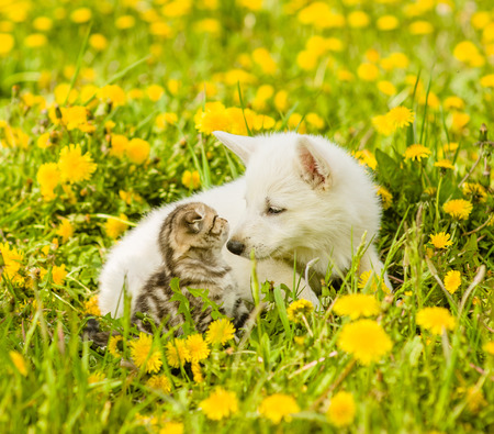 Puppy and kitten looking at each other, sitting on green grass. Stock Photo
