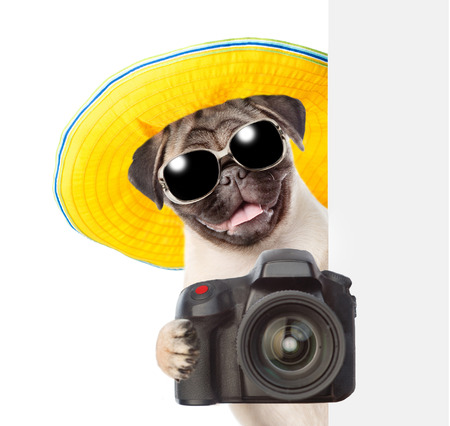Dog photographer in summer hat and sunglasses peeking from behind empty board and taking pictures. isolated on white background.