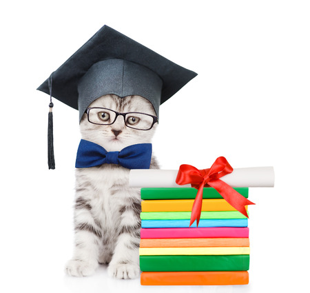 Kitten with black graduation hat sitting near books with diploma. isolated on white background.