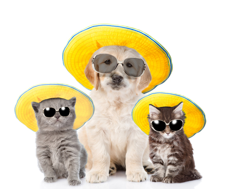Group of pets in sunglasses and straw hats looking at camera. isolated on white background.