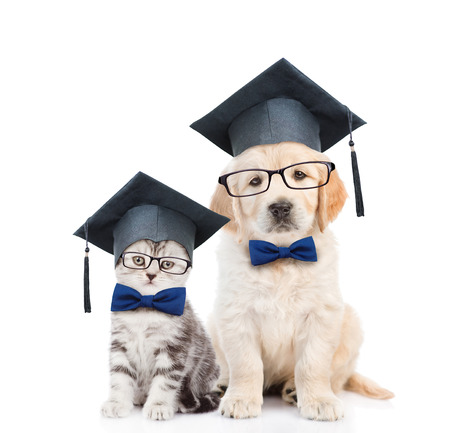 Kitten and Golden retriever puppy with black graduation hats and eyeglasses sitting together. isolated on white background.