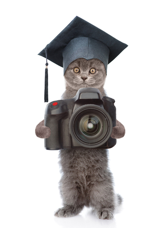 Cat photographer with black graduation hat taking pictures. isolated on white background. Stock Photo