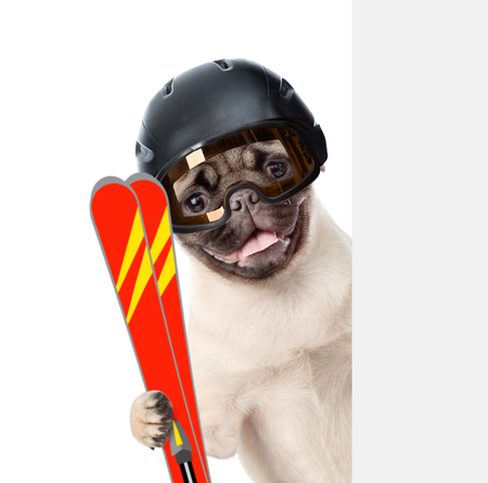 mountain peek: Puppy wearing a helmet holding skis peeking from behind empty board. isolated on white background.