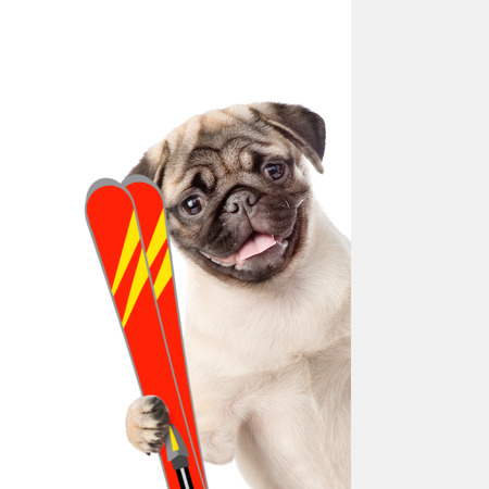 mountain peek: Puppy with skis peeking from behind empty board. isolated on white background.