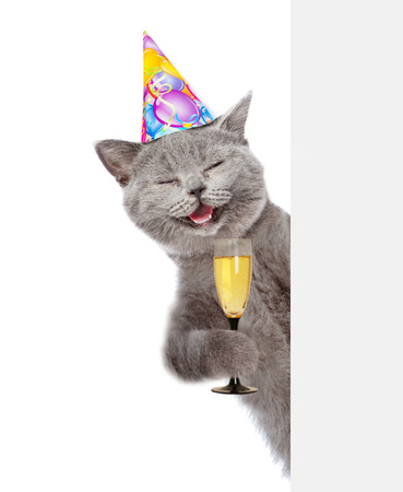 Happy cat in birthday hat holding glass of champagne and peeking from behind empty board. isolated on white background.