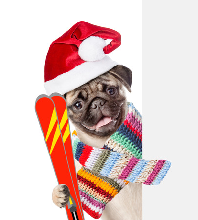 mountain peek: Dog in red christmas hat and scarf holding skis and peeking from behind empty board. isolated on white background.