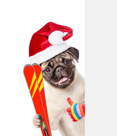 mountain peek: Dog in red christmas hat holding skis, peeking from behind empty board and showing thumbs up. isolated on white background. Stock Photo