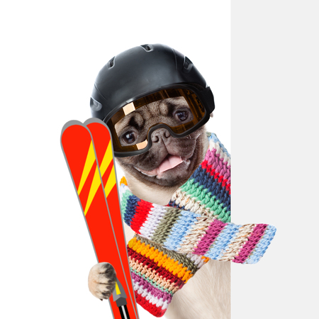mountain peek: Puppy wearing a helmet and scarf holding skis peeking from behind empty board. isolated on white background.