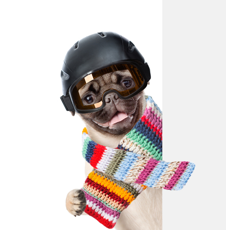 mountain peek: Puppy wearing a helmet and scarf peeking from behind empty board. isolated on white background.