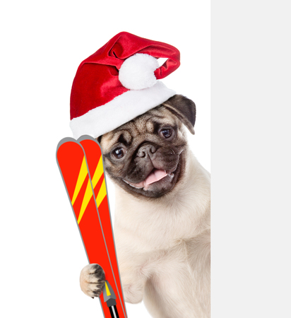 Dog in red christmas hat holding skis and peeking from behind empty board. isolated on white background.